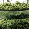 Methods for Marijuana Drying