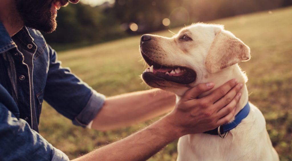 cbd oil dogs arthritis